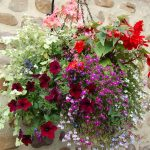 Summer hanging basket.