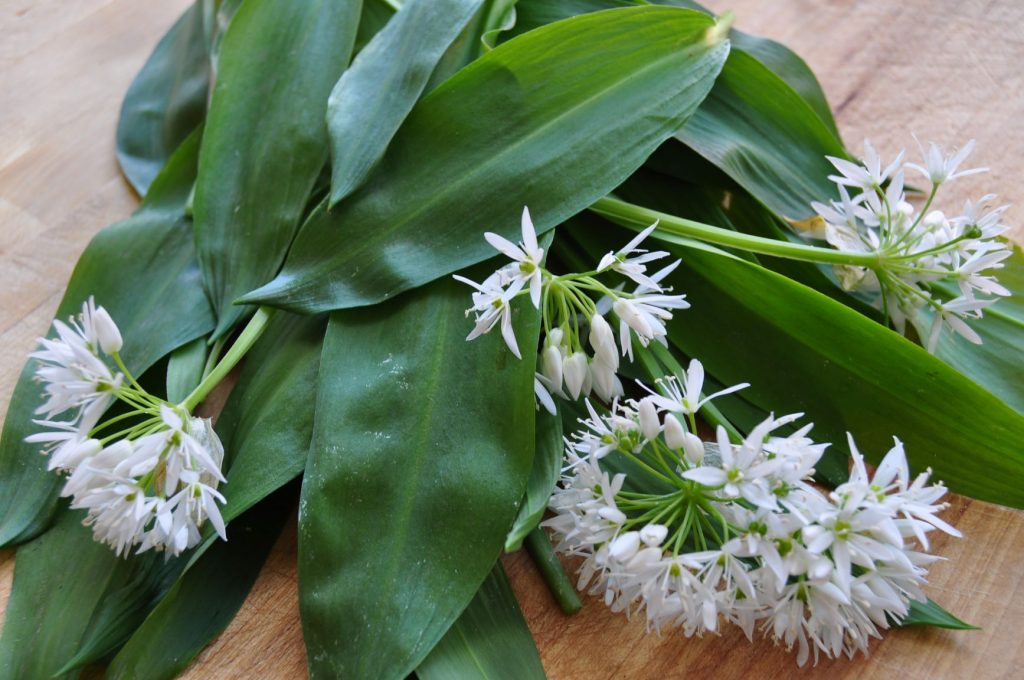 Wild garlic web