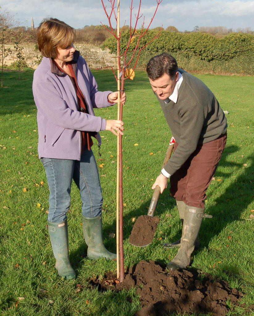 Planting Stan's tree - 2 web
