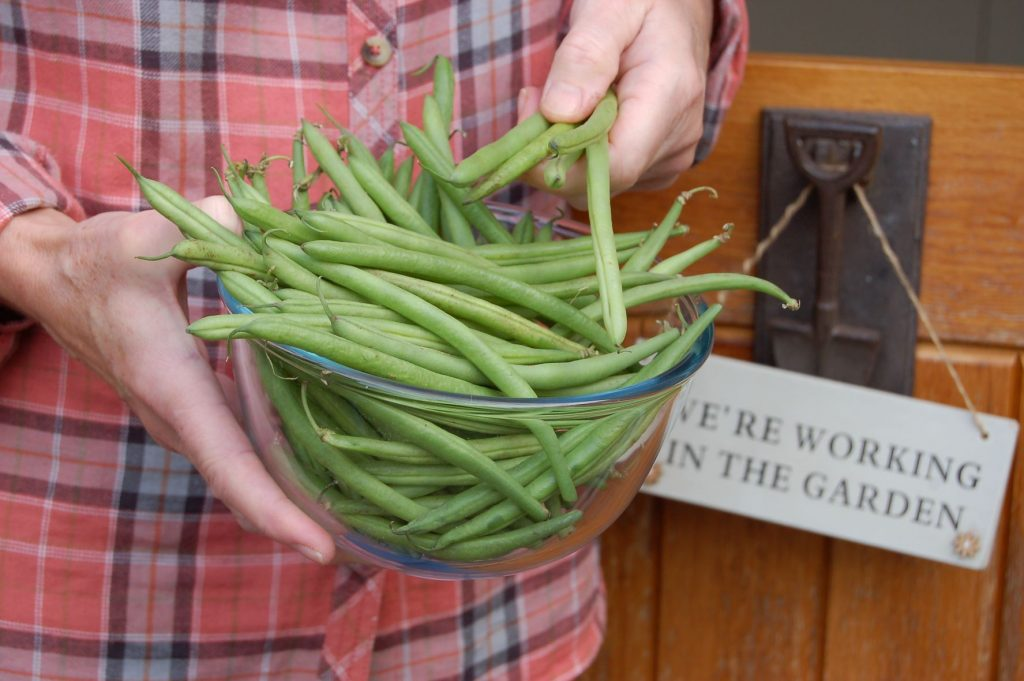 French beans web